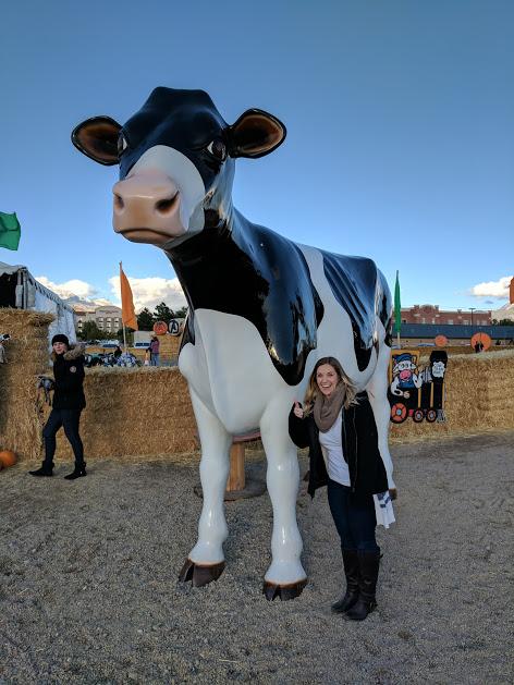 Cow Cornbellys